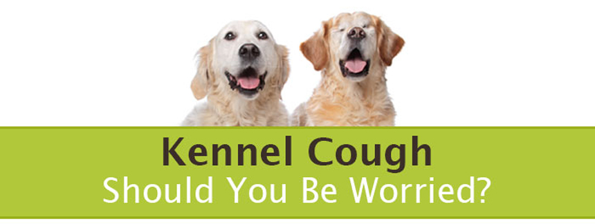 What Would Make A Dog Cough