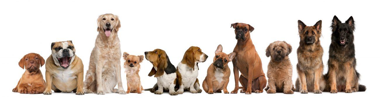 Doggieland dog daycare and boarding